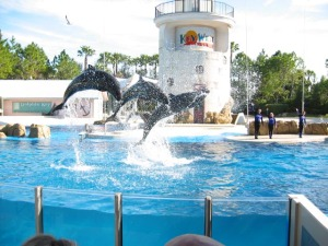 Source: http://www.virtual-travel.info/sitebuildercontent/sitebuilderpictures/orlando-fl_sea-world.jpg